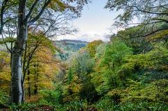 Allen Banks-Ansicht über bewaldetes Tal Stockfotografie