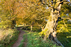 Allen Banks country path. Woodland walk at Allen Banks in Northumberland past ancient trees stock images