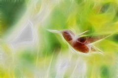 Allen Hummingbird In Flight Foto de Stock Royalty Free