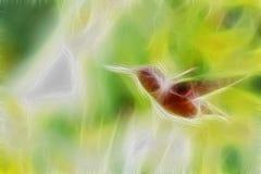 Allen Hummingbird In Flight Royalty Free Stock Photo