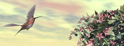 Allen's hummingbird and flowers - 3D render Stock Photos