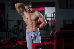Allenamento del culturista in palestra, ente maschio muscolare perfetto Fotografia Stock Libera da Diritti