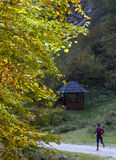 Allenamento nella foresta Fotografie Stock