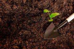 Allenamento primaverile delle plantule per il periodo di estate Immagine Stock