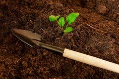 Allenamento primaverile delle plantule per il periodo di estate Fotografie Stock Libere da Diritti