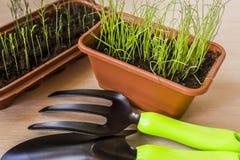 Allenamento primaverile delle plantule per il periodo di estate Immagine Stock Libera da Diritti