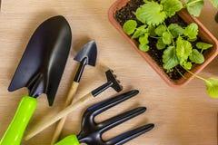 Allenamento primaverile delle plantule per il periodo di estate Immagini Stock