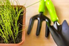 Allenamento primaverile delle plantule per il periodo di estate Immagini Stock Libere da Diritti
