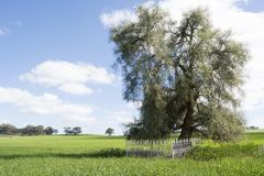 Scotty`s Grave, Allen Creek, South Australia. Allendale, South Australia, Australia - September 30, 2017: Scotty`s Grave in the middle of a field marks the Stock Images