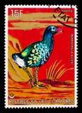 Alleni del Porphyrio del ` s Gallinule di Allen, serie degli uccelli, circa 1978 Immagini Stock Libere da Diritti