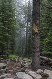 Allenspark Trailhead Photographie stock