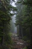 Allenspark Trailhead lizenzfreies stockbild