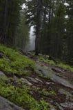 Allenspark Trailhead lizenzfreie stockfotos