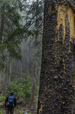 Allenspark Trailhead στοκ εικόνες με δικαίωμα ελεύθερης χρήσης