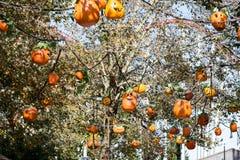 ALLENTOWN, PA - PAŹDZIERNIK 22: Halloweenowe dekoracje przy Dorney parkiem w Allentown, Pennsylwania Obraz Stock