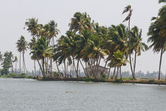 Allepey city on water. Backwater, rice plantation, coconuts palm mango tree. River landscape. Allepey city on water. Backwaters, rice plantation, coconuts palm royalty free stock photo