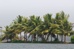 Allepey city on water. Backwater, rice plantation, coconuts palm mango tree. River landscape. Allepey city on water. Backwaters, rice plantation, coconuts palm royalty free stock photos