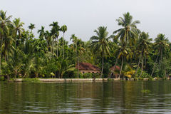 Allepey city on water. Backwater, rice plantation, coconuts palm mango tree. River landscape Stock Photo