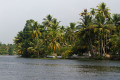Allepey city on water. Backwater, rice plantation, coconuts palm mango tree. River landscape Royalty Free Stock Images
