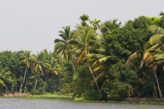 Allepey city on water. Backwater, rice plantation, coconuts palm mango tree. River landscape Royalty Free Stock Photo