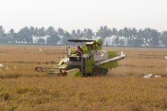 Allepey, Kerala, India, il 31 marzo 2015: Uomo non identificato con il riso del raccolto della macchina della mietitrice nel camp Immagini Stock Libere da Diritti