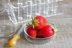 Allergia alimentare e ricerca in laboratorio Immagine Stock