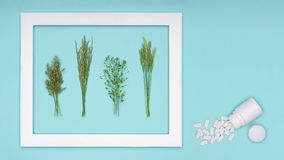 allergia Allergeni, pillole di antihistamin, allergie stagionali Allergia minima del polline dell'erba di disposizione del piano Fotografia Stock