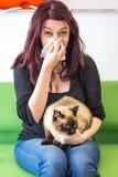 Allergia dei peli del gatto Immagini Stock