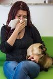 Allergia dei peli del gatto Fotografia Stock