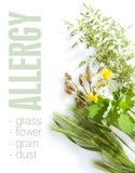 Allergic types of grass Stock Photos