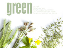 Allergic types of grass Stock Images