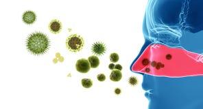 Allergie/rhume des foins de pollen Photographie stock libre de droits