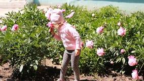 Allergies du ` s d'enfants La fille d'enfant renifle l'arome de la fleur de pivoine et éternue banque de vidéos