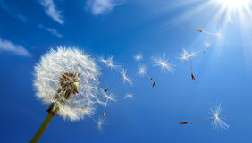 Allergy concept in spring Royalty Free Stock Image