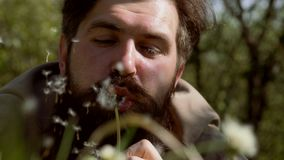 Allergy free concept. Cold flu season. Handsome man sitting on the field in green grass and blowing dandelion - close up stock video footage