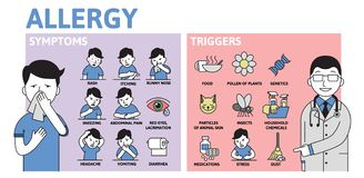 Allergy infographics. Allergy Symptoms and Triggers information poster with text and character. Flat vector illustration. Allergy infographics. Allergy Symptoms vector illustration