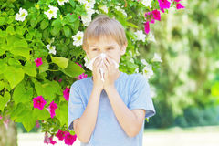 Allergy. Little boy is blowing his nose near tree in bloom. Royalty Free Stock Images