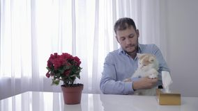 Allergy symptoms, young man plays with his cat and suffers from sneezing on fur of pet stock video footage