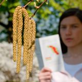 Allergy Woman birch tree. A woman behind catkins from a birch tree stock photo
