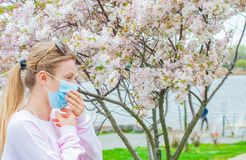 Allergy. Young woman in protective mask from pollen allergy, among blooming trees in park stock photography