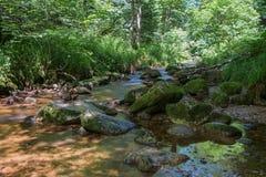 Allerheiligen-Wasserfälle in blackforest mit Steinen und Bäumen lizenzfreie stockfotografie