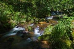 Allerheiligenwatervallen in het zwarte bos stock afbeelding