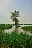 Allerta degli uccelli, prato fatto galleggiare e vecchi alberi Fotografia Stock