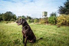 Allerta del cane Fotografie Stock