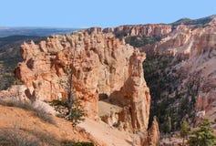 Allerta del canyon della betulla nera Fotografie Stock Libere da Diritti