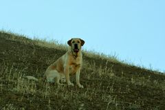Allerta del cucciolo Immagini Stock Libere da Diritti