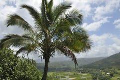 Allerta del giacimento del taro in Princeville, Kauai Fotografia Stock Libera da Diritti