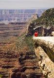 Allerta del Grand Canyon Immagine Stock