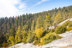 Allerta del parco nazionale della sequoia Immagine Stock