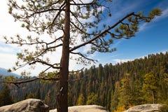 Allerta del parco nazionale della sequoia Immagini Stock